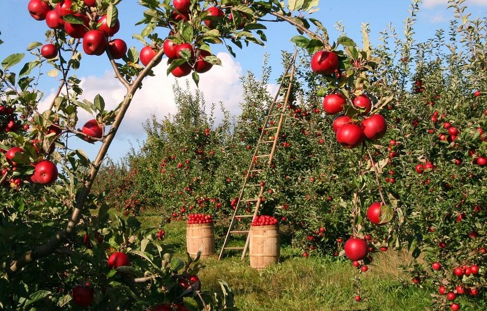 защищаем сад от вредителей
