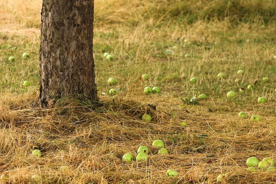 опилки под деревья