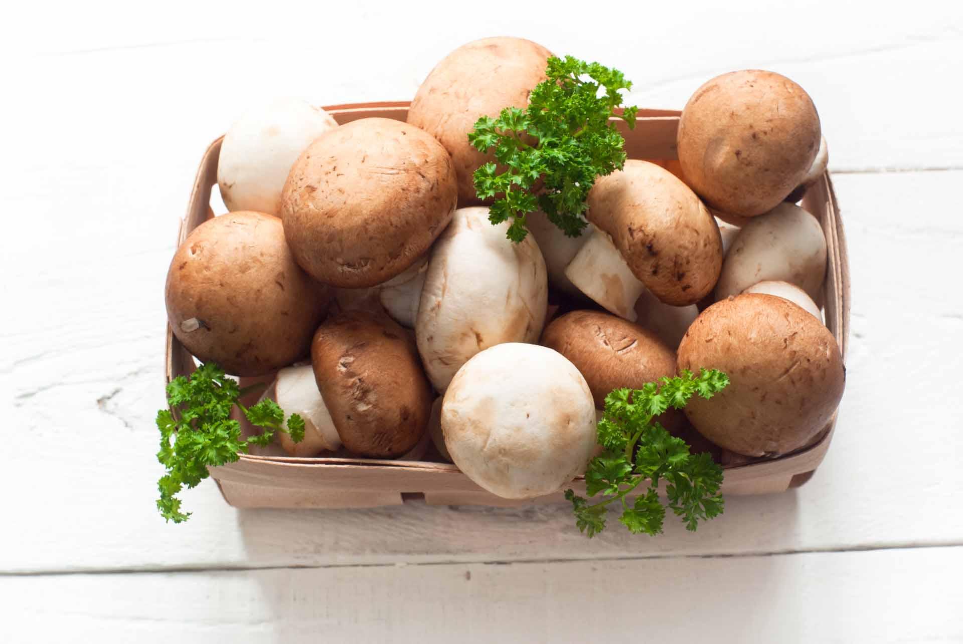 как вырастить грибы дома