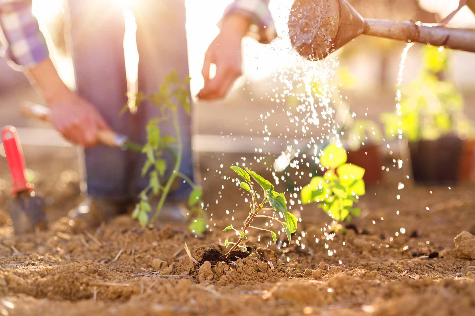 растения которые не боятся солнца