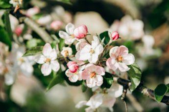 как подкармливать плодовые деревья
