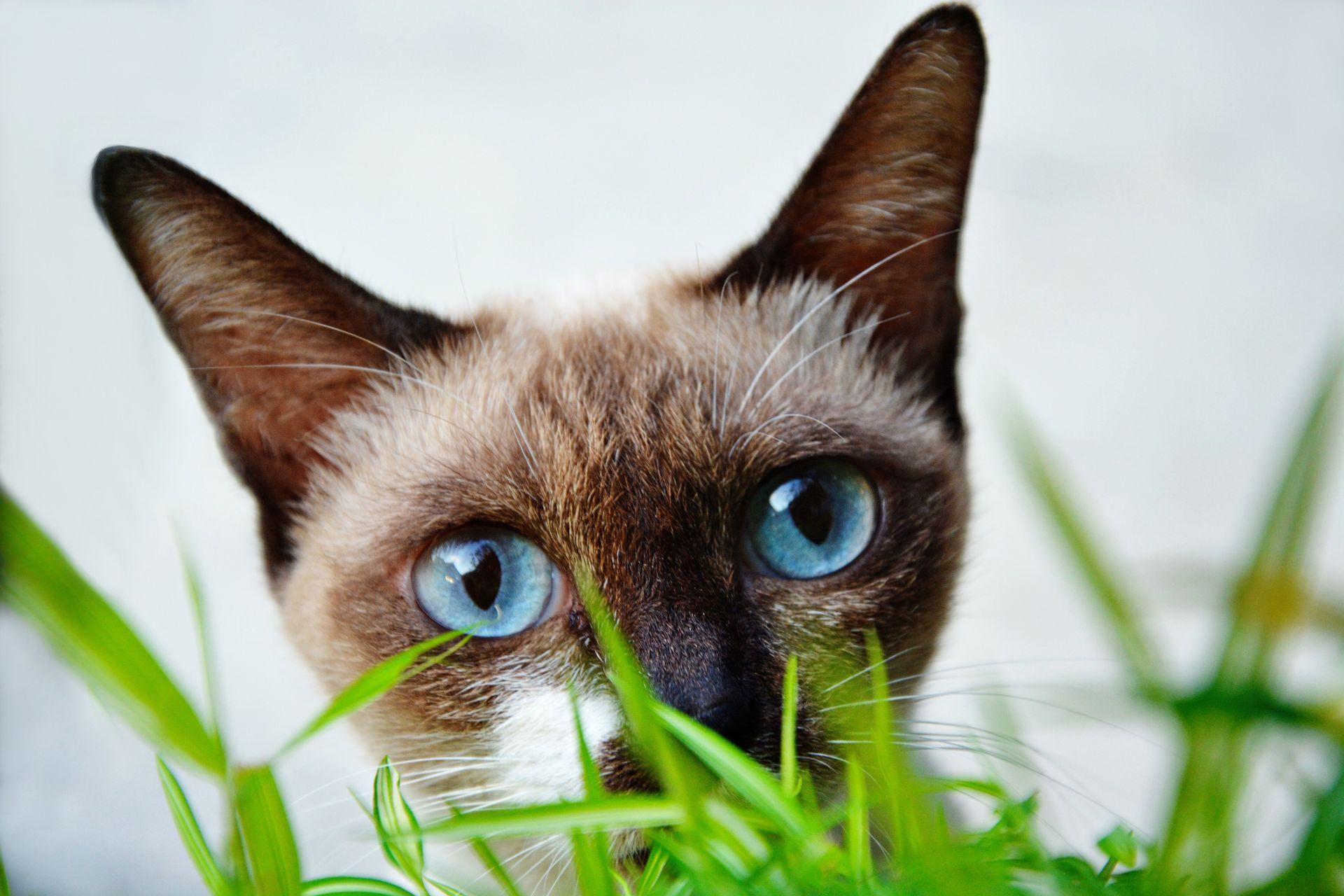 как защитить рассаду от кошки