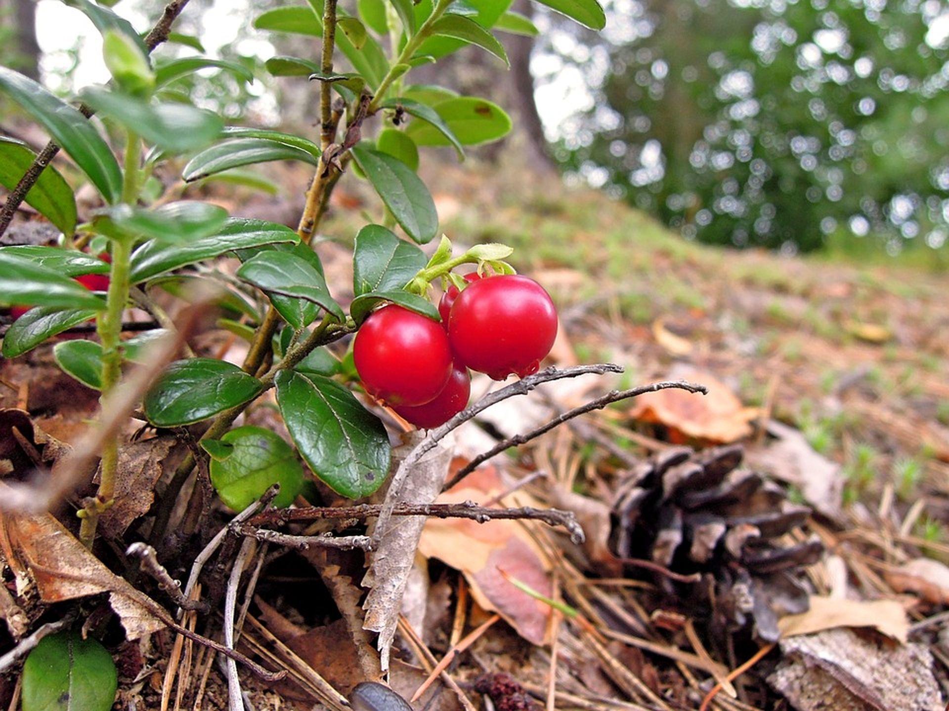 Что посадить под плодовыми или хвойными деревьями